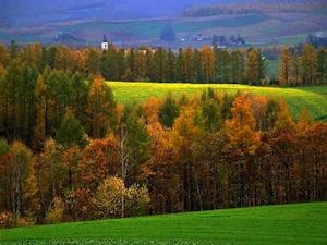 Dai Monti Dauni un'idea per lo sviluppo: la forestazione produttiva