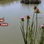 Lago Salso, quando una palude diventa un luogo d'incanto