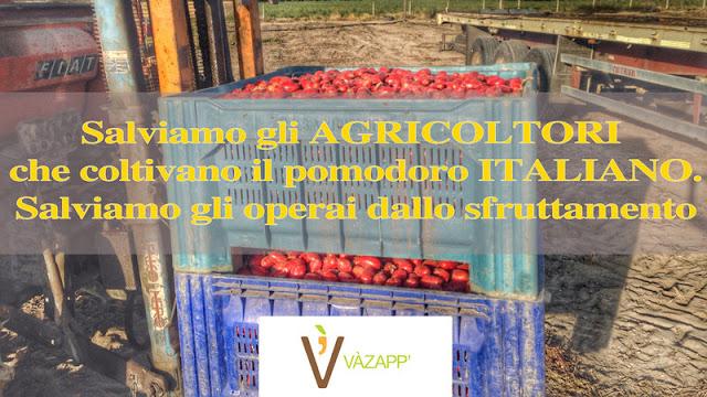 Pomodoro, troppe speculazioni: una petizione per salvare il raccolto e difendere i produttori