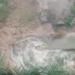 Inquinamento del Candelaro: è emergenza ambientale