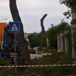 Quegli alberi abbattuti che distruggono la memoria…