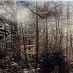 I colori della Foresta Umbra, com'era cent'anni fa
