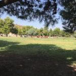 Rondini basse a Parco San Felice, le ragioni del fenomeno