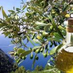 Una filiera dell'olio d'oliva tutta meridionale (di Domenico Iannantuoni e Michele Eugenio Di Carlo)
