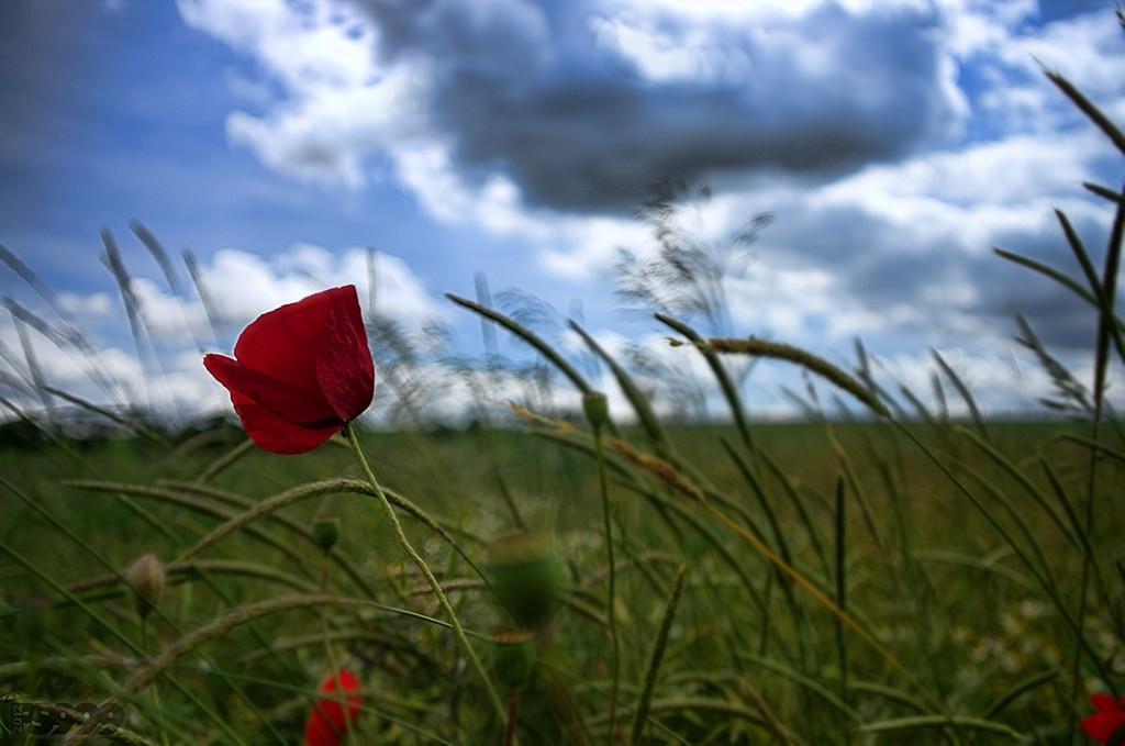 Qualità della vita: Foggia risale, Bari sprofonda