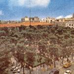 Gli alberi che Foggia e Capitanata si meritano (di Franco Antonucci)