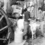 Quando a Foggia vacche e pecore passeggiavano in centro