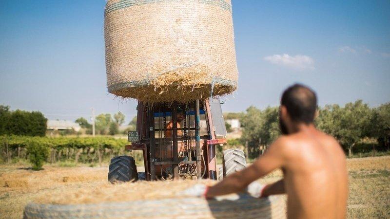 Sostenere la nostra agricoltura, ecco come si deve fare